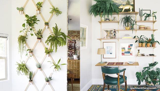 plantas como objeto decorativo