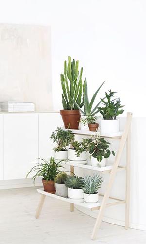 Les plantes d interieur comme objets de decoration for Plantes d interieur decoration